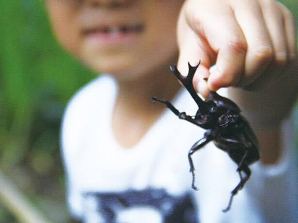 カブト虫の思い出